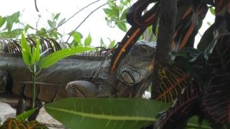 1609 Iguana Cancun
